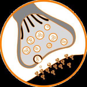 nofap androngen receptor